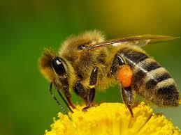 Талисман пчела