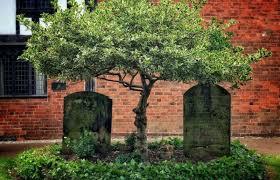 Размышление на кладбище - стихи