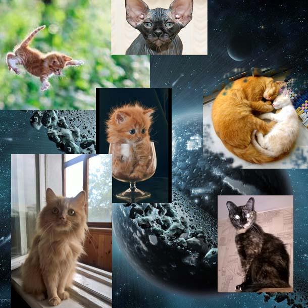 Кошки-пришельцы - стихи о магии